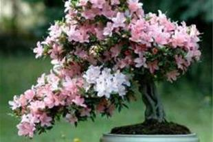 روش کاشت و پرورش گل