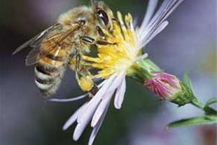 پرورش زنبور عسل ساخت کندو