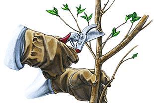 روشهای هرس درختان - 1