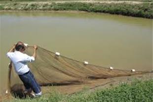 فروش یا معاوضه استخر پرورش ماهی با مجوز و سند