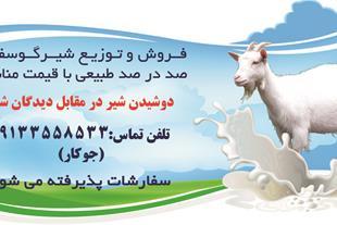 فروش و توزیع شیر تازه گوسفند 100% طبیعی