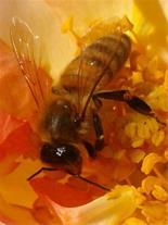 فروش کندو عسل
