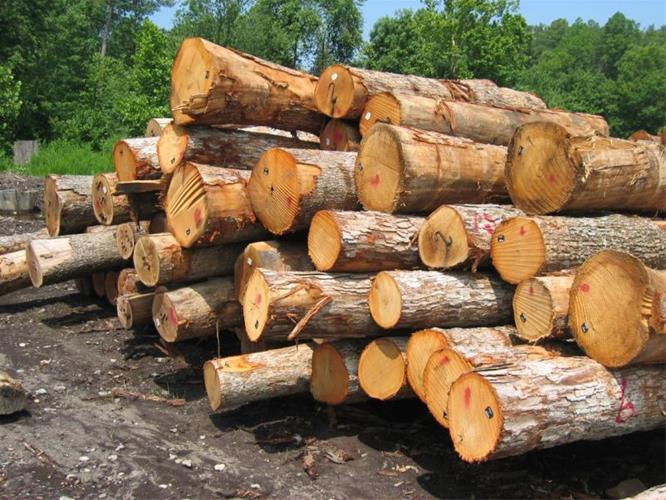 درخواست خرید چوب اکالیپتوس