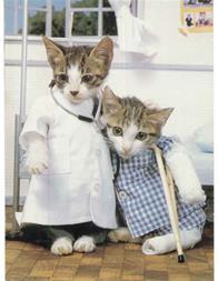 کلینیک دامپزشکی در کرج - کلینیک دامپزشکی آبان - 1