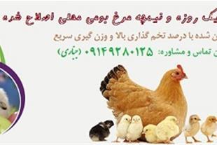 مزرعه پرورش و عرضه جوجه یک روزه و نیمچه مرغ بومی - 1