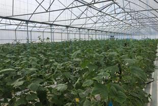 فروش گلخانه هیدروپونیک در حال فعالیت - 1