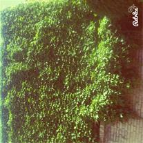 دیوار حیاط