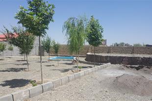 زمین درخت کاری شده اماده برای گرفتن سند 6دانگ