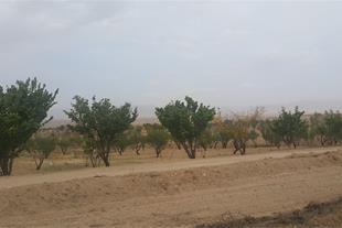 فروش یا معاوضه باغ 20 هکتاری در روستای چیر