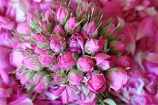 فروش گلاب و عرقیات گیاهی
