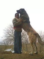 غذای خشک سگ برای نژاد سگ سرابی