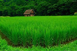زمین زراعی