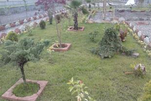 طراحی و اجرای فضای سبز و احداث باغ ، سمپاشی درختان