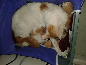 سه تا بچه گربه ناز به همراه مادرشون
