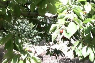 فروش باغ 2000 متری در لواسان