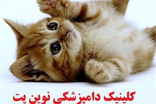 کلینیک دامپزشکی نوین پت شمال شرق تهران دکتر سجادی