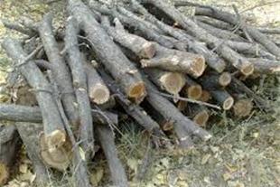 خرید هیزم و ضایعات چوب درویش