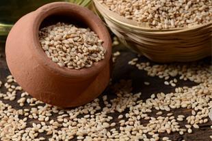 واردات و پخش عمده دانه های روغنی