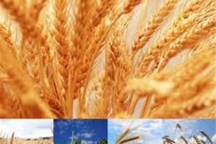 زمین کشاورزی کوچک با حق آبه فروشی - 1