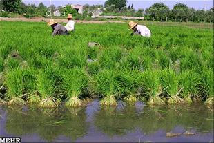 25هکتار زمین کشاورزی با چا آب فروشی