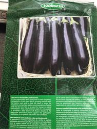 بذر گلخانه ای بادمجان لانگو - 1