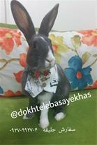 فروش لباس حیوانات خانگی،همستر،خرگوش و...
