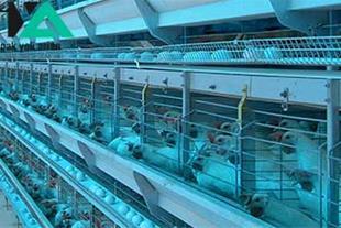 قفس تمام اتوماتیک مرغ تخم گذار شرکت هلمن آلمان
