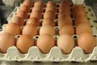 خرید تخم مرغ رسمی تک زرده دو زرده