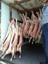 پخش گوشت گوسفندی تازه طالقان