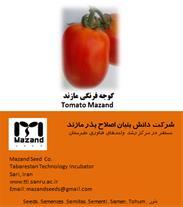 بذر گوجه فرنگی در ساری - 1