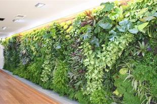 طراحی و اجرای فضای سبز، نگهداری