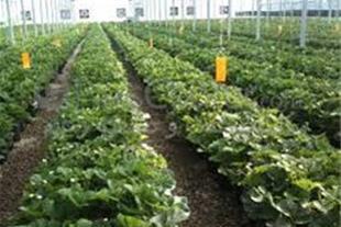 فروش گلخانه در نظرآباد ، فروش زمین