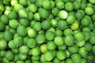 فروش لیمو ترش تازه باغات جهرم