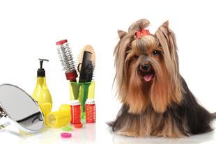 خدمات سگ و گربه در محل
