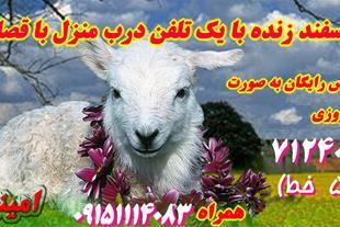 گوسفند زنده در مشهد