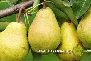 فروش نهال سیب - نهال گردو - نهال پیوندی -درخت میوه