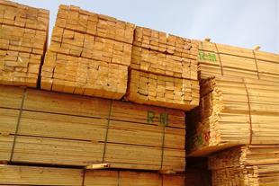 قیمت چوب روسی در انزلی