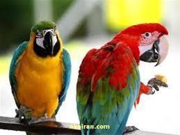 کلینیک دامپزشکی پارسین ( پرندگان و حیوانات خانگی )