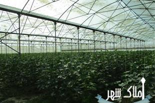 فروش 3 هکتار گلخانه در شهریار