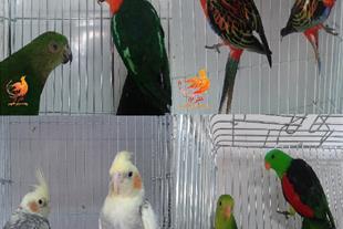 فروش عمده و خرده پرندگان خاص