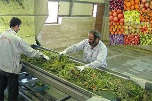 خریدار ضایعات میوه و سبزی و صیفی از سراسر ایران