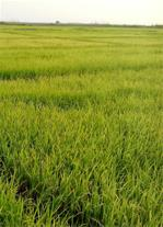 تولید و فروش محصولات کشاورزی