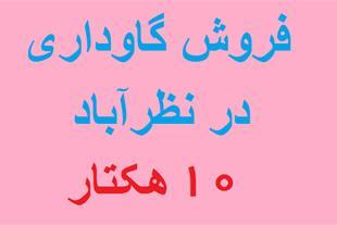 خرید و فروش گاوداری در نظر آباد
