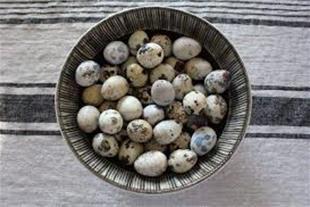 خرید و فروش تخم صد در صد نطفه دار