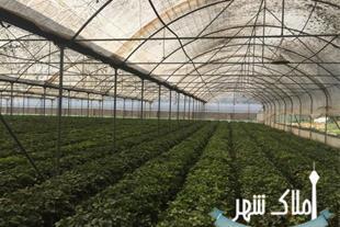 خرید 2هکتار گلخانه – باغ – ویلا ( مرکز شهریار)