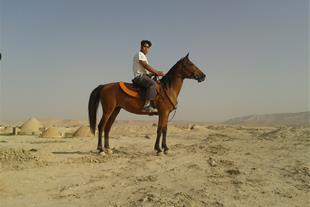 فروش اسب دره شور