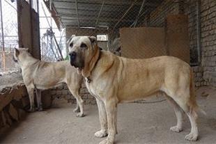درمان و واکسیناسیون سگ و گربه و پرندگان خانگی