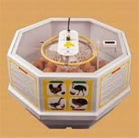 فروش مستقیم دستگاه های جوجه کشی خانگی 30 تایی - 1