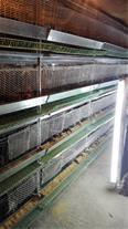 بزرگ ترین تولید کننده تخم کبک درخراسان رضوی