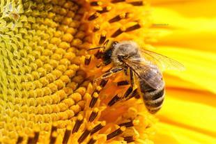 شروع دوره زنبورداری